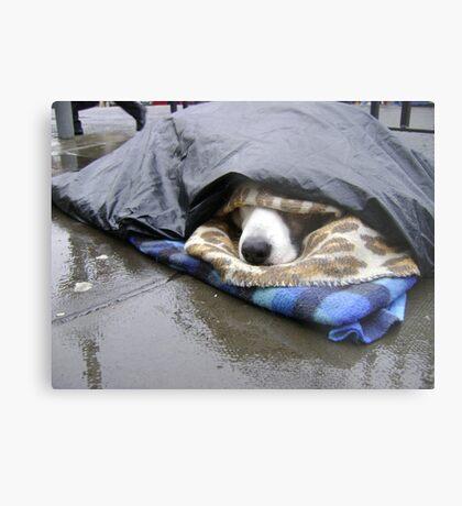 Dumper (street seller's dog) Metal Print