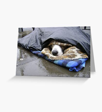 Dumper (street seller's dog) Greeting Card