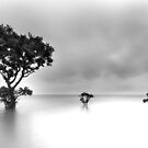 Gray Dawn - Cleveland Point Qld by Beth  Wode