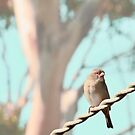 Bird on a wire by Selina Tour