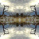 Natures Mad Mirror by David Haworth
