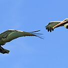 Synchronized pelicans in flight! by Anthony Goldman