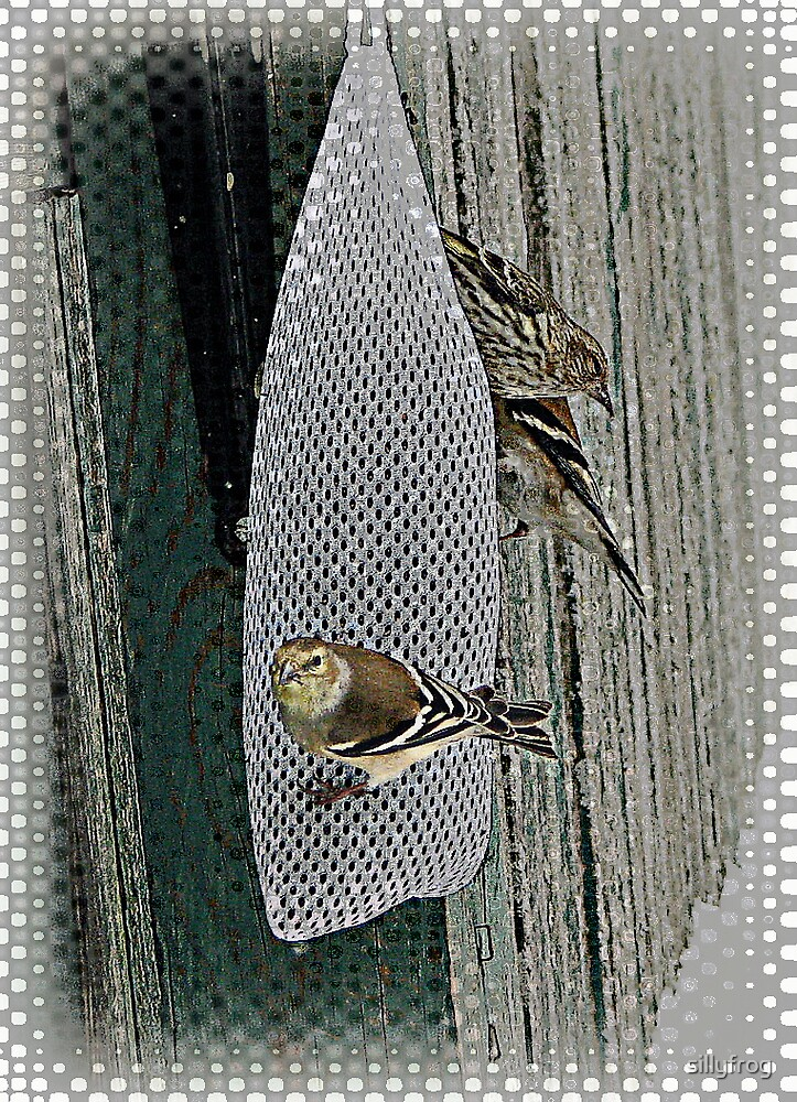 Goldfinch in Cloth by sillyfrog