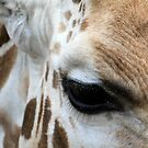 giraffe by keki
