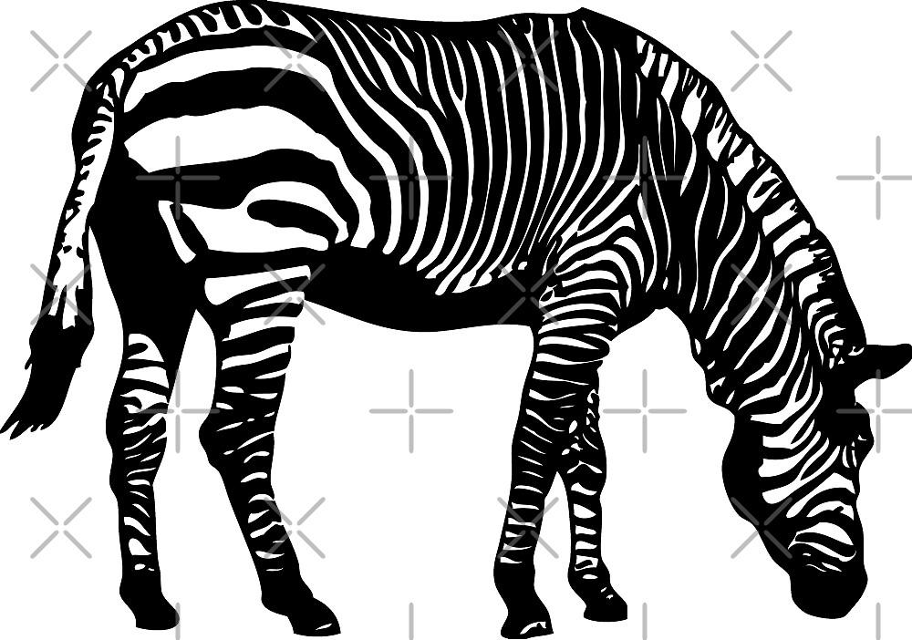 Zebra by Port-Stevens
