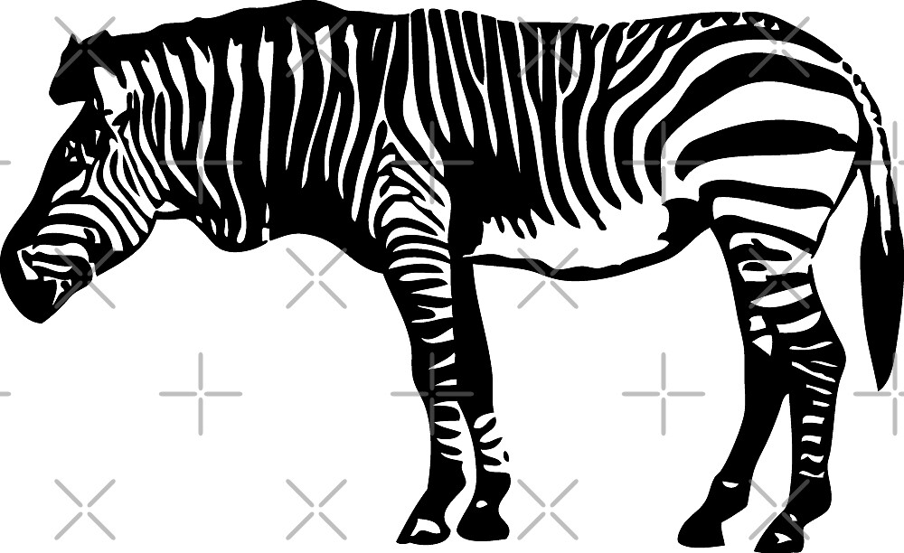 Zebra by Port-Stevens