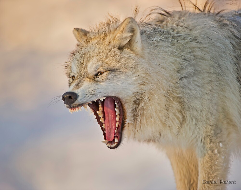Anger display by Daniel  Parent