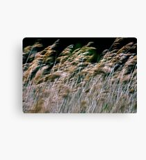 Reeds At Salthouse Marsh Canvas Print