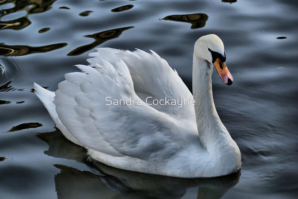 Graceful Beauty by Sandra Cockayne