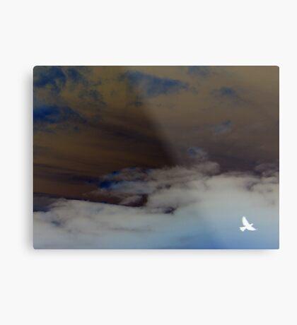hope (clouded sky, white bird flying free) Metal Print