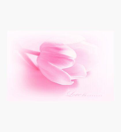 Love Is........... Photographic Print