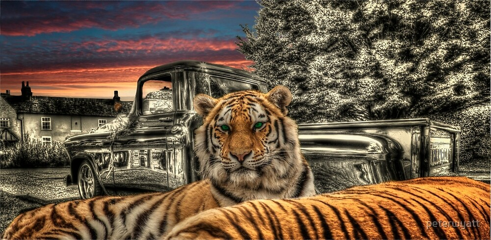 chevy and tiger by peter wyatt