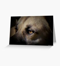 Wounded - Tale of a stray cur dog Greeting Card