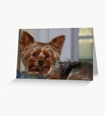 My Little Friend - Buddy the Yorkshire Terrier Greeting Card