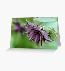 Columbine named Miss M.I. Huish Greeting Card