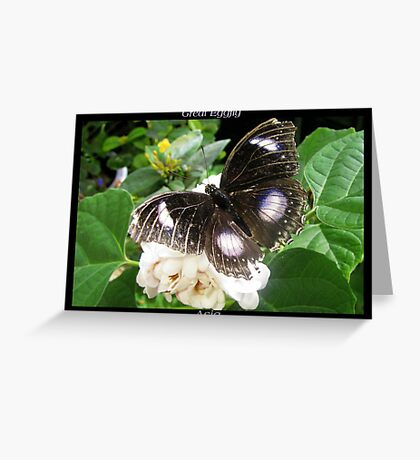 Butterfly (Asia) ~ Great Eggfly Greeting Card
