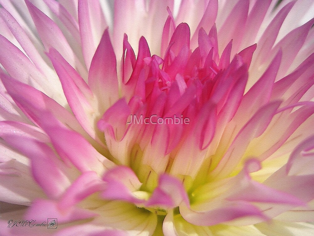 Dahlia named Star Elite by JMcCombie