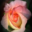 Heart of a Rose by Diana Nault
