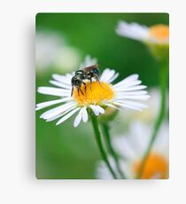 Insect Buffet Canvas Print