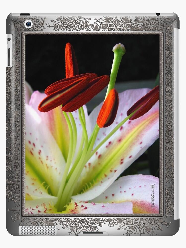 Oriental Lily Hybrid named Mojave by JMcCombie