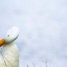 A ducks Life by Julia Goss