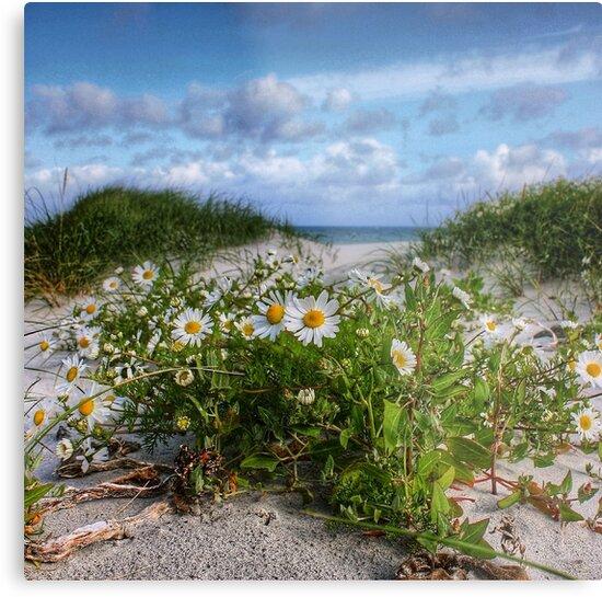 Wild flowers matter. by JefM