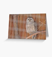 The Barred Owl Greeting Card