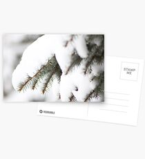 Branches of snow Postcards