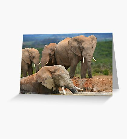 Afternoon Bath - African Elephants Greeting Card