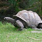 Slow and Steady wins the Race by TonyCrehan