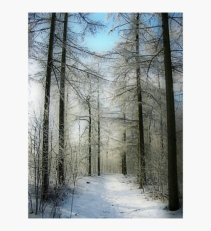A Path in the Snow Photographic Print