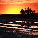 Tree at Sunrise by JuliaKHarwood