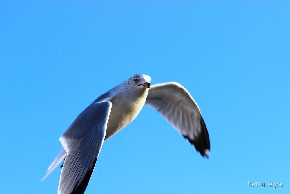 Sea Gull  by Funmilayo Nyree
