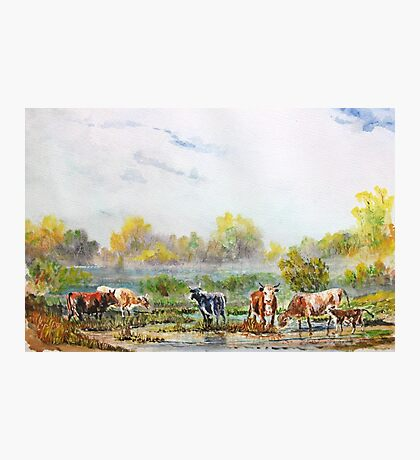 Misty morning cattle. Photographic Print