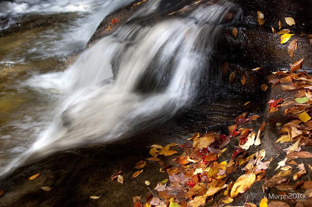 Rushing Past Autumn! by Murph2010
