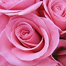 Rose Colored Roses by LeisureLane1