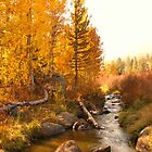 Fall Comes to the Sierras by Barbara  Brown