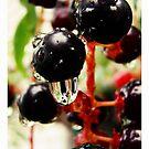 Cherry rain washes by fenist