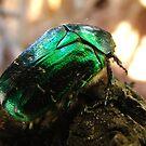 Green beetle by fenist