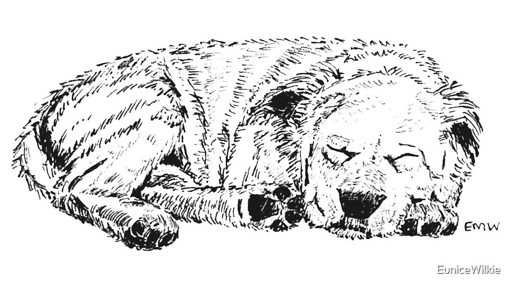 Let Sleeping Dogs Lie - Coasters & Blocks by EuniceWilkie