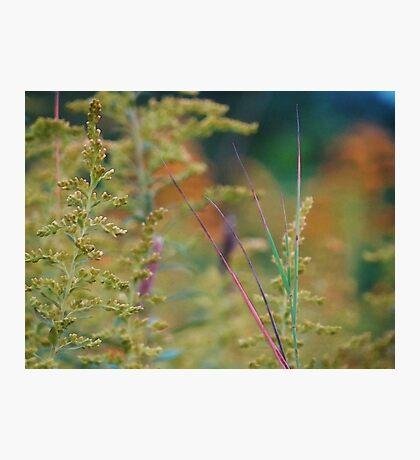Fall Grass 2 Photographic Print