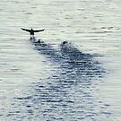Takeoff by Kasia Nowak