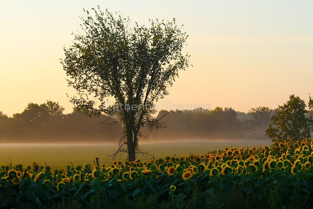 Morning Sunflowers by Catherine Sherman