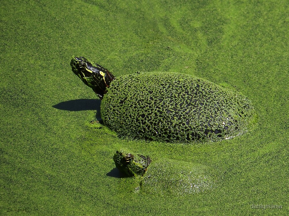Aquatic Turtle Jacuzzi by Shawna Rowe