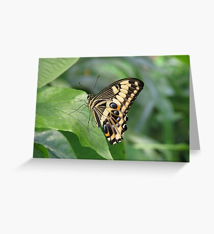 Emperor Swallowtail Greeting Card