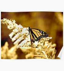 Southward Migration -Monarch Butterfly Poster