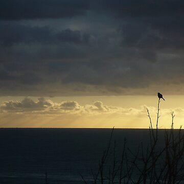 Eden bird by itzme