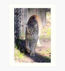 Bobcat #2 Art Print