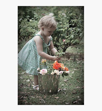 Princess Rose Photographic Print