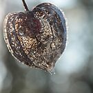 Chinese Lantern Icy and Bright by Pamela Jayne Smith